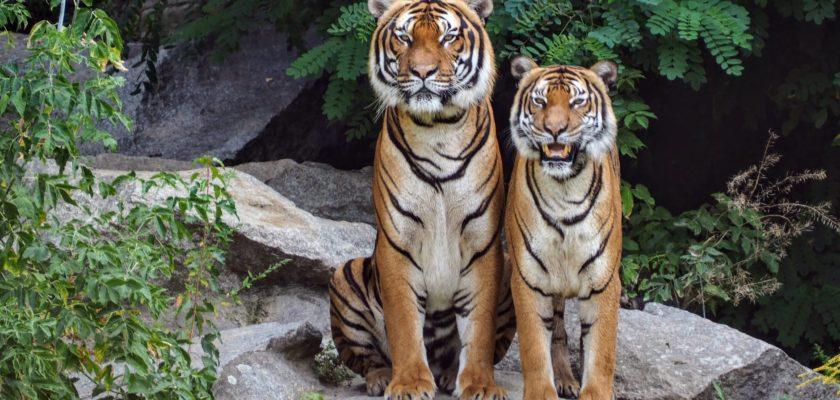 Les parcs animaliers respectent ils les animaux?